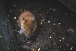 Myš ve vodě: Je tento kontroverzní test spolehlivý?