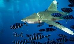 Plasty mrzačí žraloky