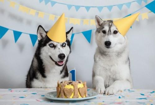 Jak se vypočítává věk psa? Vědci boří zakořeněné mýty