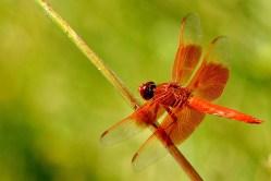 Z Německa zmizela třetina druhů hmyzu