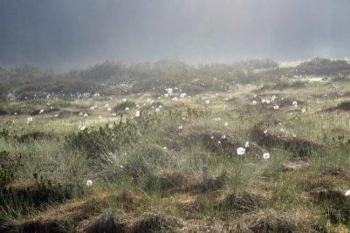 Charakter rašelinišť se mění