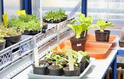 Kvůli kovům v rostlinách se spojí vědci z 30 zemí