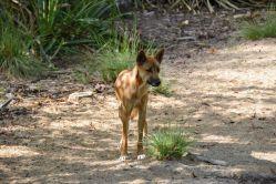 Bez dinga to jde saustralskou vegetací z kopce