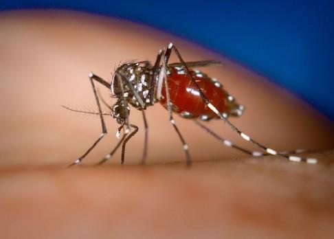 Pozor na zrádnou horečku chikungunya