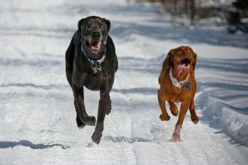 Nová studie: pes pochází z Asie