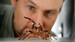 Může pavoučí jed zmírnit chronické bolesti?
