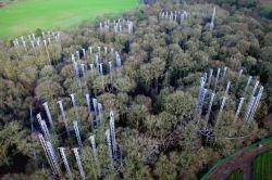 Vědci vystavili les hladinám CO2, které se očekávají v roce 2050.