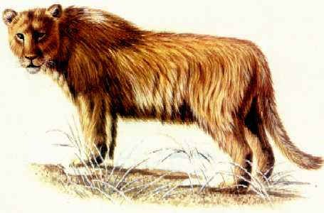 Byli jeskynní lvi mlsní?
