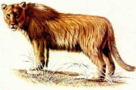 Výsledek obrázku pro lev jeskynní