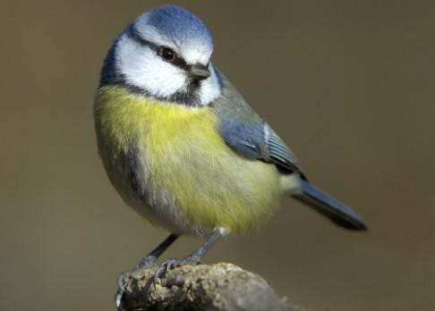 Aplikace v mobilu rozezná ptáka podle hlasu