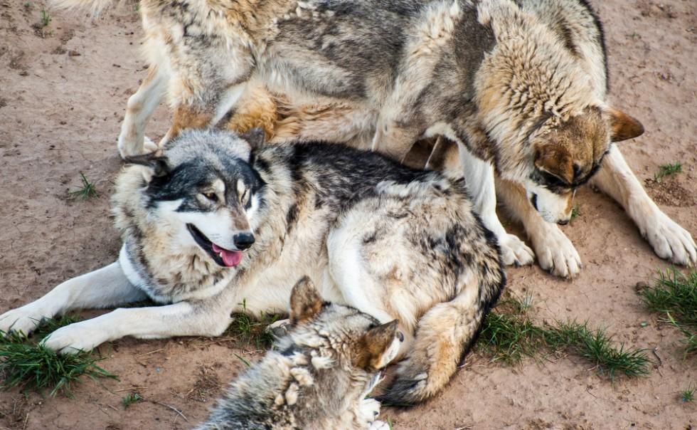 Wild Animal Sanctuary, Keenesburg, CO