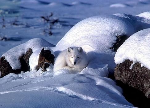Bude Arktida letos bez ledu?