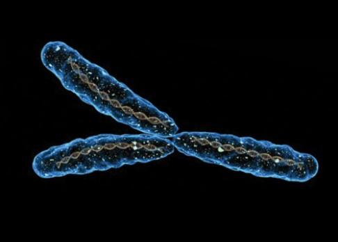 Ztráta chromozomu Y zřejmě zabíjí muže