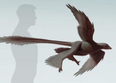 Nově objevený dinosaurus létal díky čtyřem křídlům