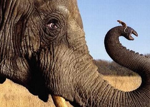 Od myši k slonovi za 24 000 000 generací