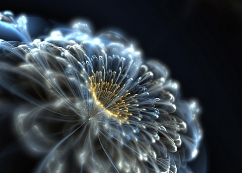 Neonové reklamy na květinách