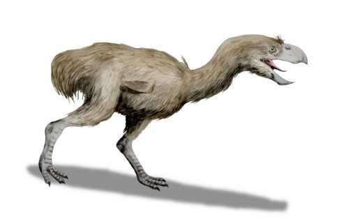 Obří pták žil po boku dinosaurů