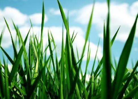 Brněnští vědci odhalili tajemství DNA travin
