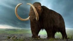 Jakými nemocemi trpěli mamuti?