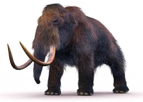 Nejmenší mamut světa je z Kréty