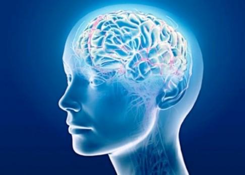 Vědci umí znovu aktivovat vzpomínky