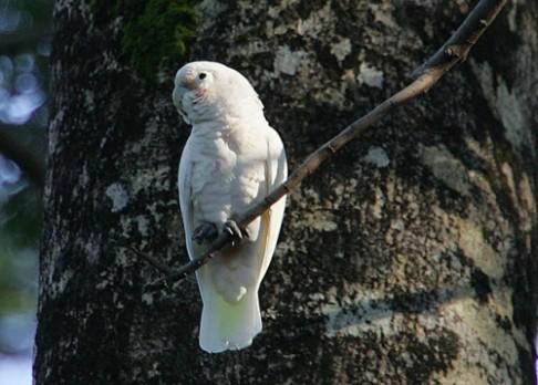 Ptáci umějí používat nástroje