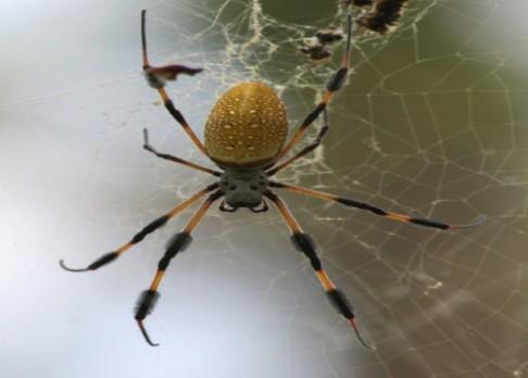 Pavouci umí počítat
