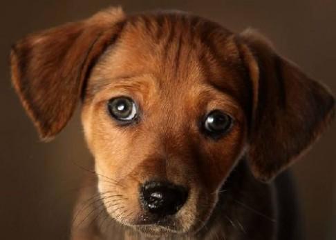 Psi nám rozumí čím dál lépe