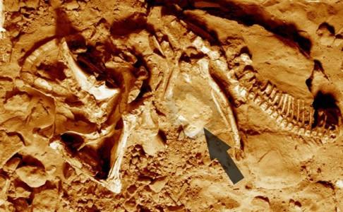 Dinosaurus zemřel ve vlastních stopách