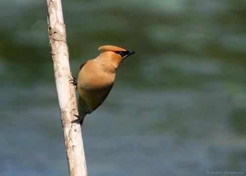 Hluk měst odhání zpěvné ptáky