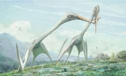 V Transylvánii objevena fosílie gigantického ptakoještěra