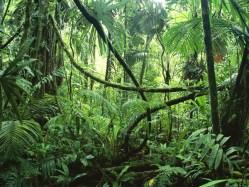 Amazonské deštné pralesy nezvládají přírůstky oxidu uhličitého