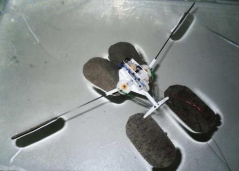 První robotická vodoměrka