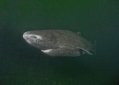 Nejpomalejší žralok světa