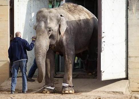 V pražské ZOO jsou sloni v novém