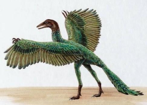 Proč měli dinosauři peří?