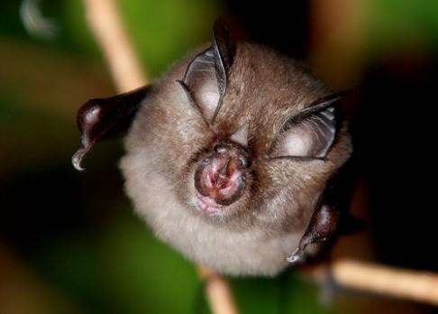 Seznamte se sousedy netopýry