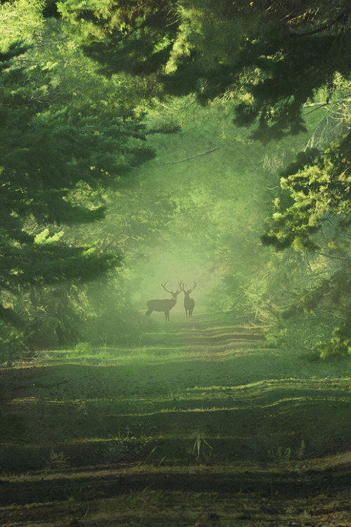 touchdisky:</p> <p>Wild deer bymatt dinning</p> <p>WHAT ARE THEY THINKING?<br /> DO THEY WANT TO TRUST US?<br /> ARE THEY HOPING THAT<br /> PEOPLE COULD BE NICE TO THEM?<br /> ARE WE CAPABLE OF<br /> APPRECIATING NATURE?<br /> IF I WERE THEM,<br /> I WOULDN'T TRUST US.