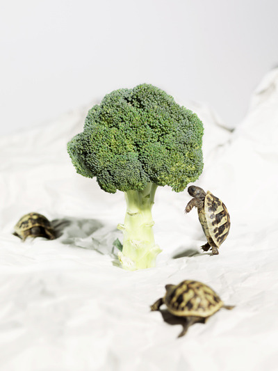 Photojojo! • Using food from his refrigerator and animals (that...