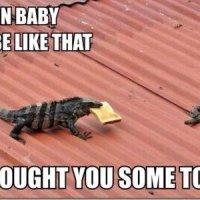 Iguana Problems