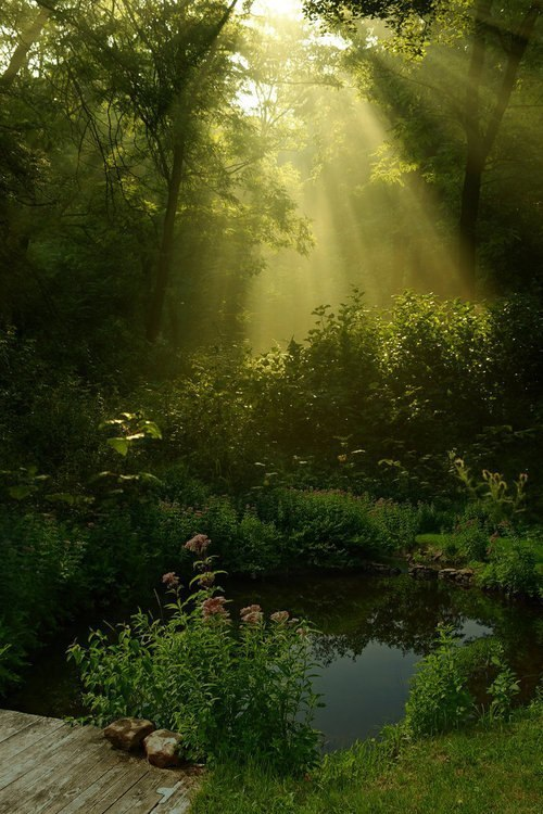 simply-beautiful-world:<br /> SUNLIGHT HIGHLIGHTS THIS ONE SPOT.<br /> WHY IS THIS SPOT SO SPECIAL?<br /> DOES IT HOLD SECRETS OR<br /> MAYBE TREASURES?<br /> OR IS IT SPECIAL BECAUSE IT IS YOURS ALONE?