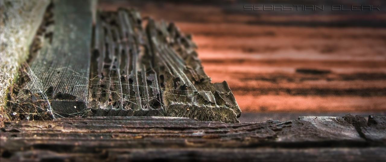 Wood Fence- HDR and Tilt-Shift Blur