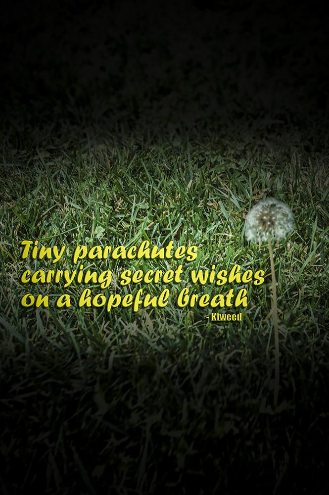 Haiku dandelion photoshop