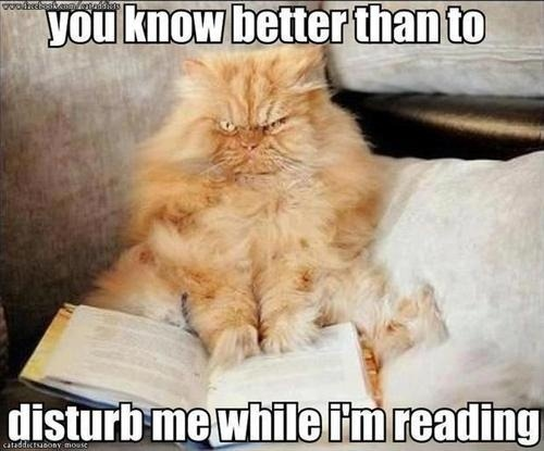 """You know better than to disturb me while I'm reading."""