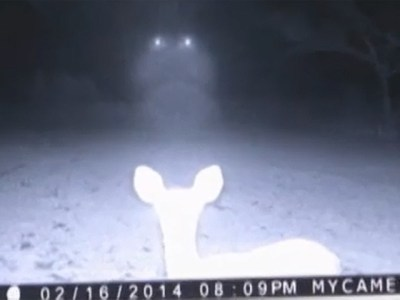 This photo is making its way around the internet and into an inbox near you.. It's from February .. The image you see if of a deer with strange lights hovering behind it.. it is from by Rainer and Edith Shattles at their Jackson County, Mississippi home..There is also video ..the video has gone viral after WLOX did a profile on the couple's trail cams..And it's a series of them, over an hour of time in which the deer were lit up by bright lights .. Very creepy stuff.. a deer in the headlights.. But the headlights not from a car.. but maybe a galaxy far far away?