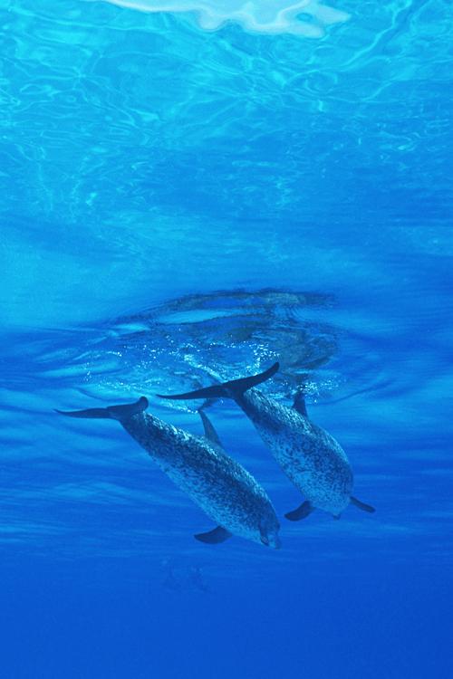 plasmatics-life:Dolphins