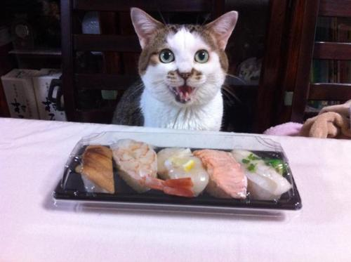 "thefluffingtonpost:</p> <p>5 Month Wait for Reservations at Cat Sushi Master's Restaurant<br /> Neko, a Manhattan-based cat and sushi expert, has become America's foremost sushi chef almost overnight. His tiny 8-seat restaurant located in New York's Greenwich Village only opened in August but it already has a five month waiting list for reservations.<br /> ""It's 100% completely worth the wait and steep $350 price tag for the 6-roll tasting menu,"" raved celebrity food critic Gail Simmons in a recent issue of Food &amp; Wine magazine.<br /> Neko, who is the hottest thing to burst onto the NYC culinary scene since the cronut, seems a shoo-in for a James Beard Rising Star award this year.<br /> Via Gar1986.<br />"