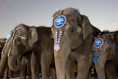 An elephant in the wild lives an average of 70 years while an elephant in captivity lives an average of 14. (source)