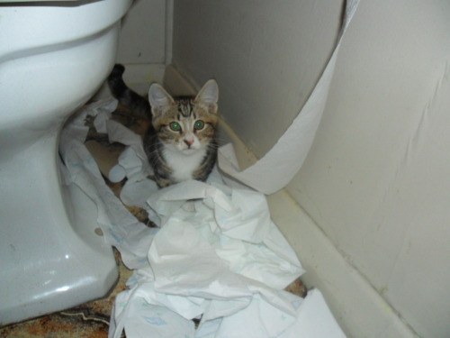 look what you have done now cat. you have wasted all my toilet paper. don't you realize that humans need that when they use their litterbox? and now that it's all over the floor no one is going to want to use it. you are ruining our lives cat.