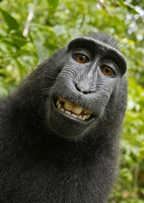 We *love* this. Look how pretty teeth make you want to smile!! Look how proud he is of his pearly whites!! As an aside, this is a *self* portrait by a *monkey*!!!! (I love my job!!!)